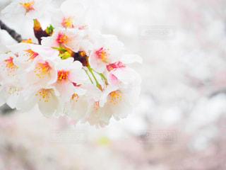 春の写真・画像素材[422049]