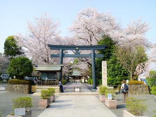 桜の季節の松陰神社の写真・画像素材[1324037]