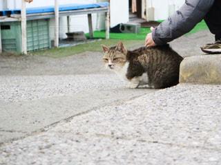 遠くを見つめるネコの写真・画像素材[1775602]