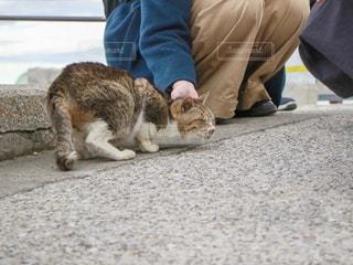地面に横になっている猫の写真・画像素材[1775604]