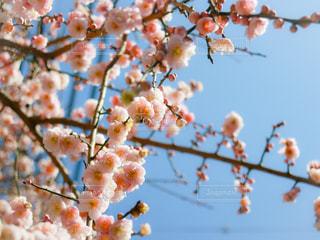 花の写真・画像素材[2158309]