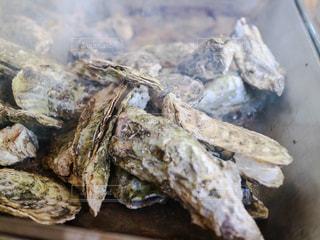 牡蠣小屋で牡蠣が焼き上がりました。の写真・画像素材[2515784]