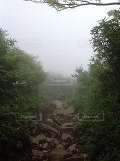 森林 - No.372018