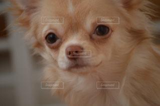 犬 - No.371949