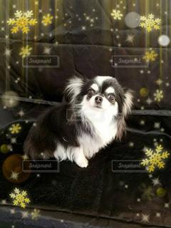 犬 - No.380227