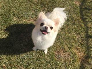 犬の写真・画像素材[381399]