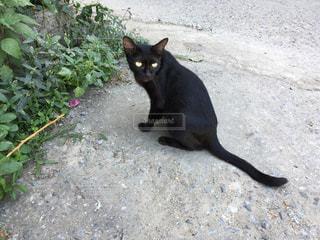 子猫の写真・画像素材[372023]