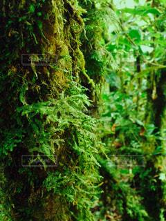 森林の写真・画像素材[398849]