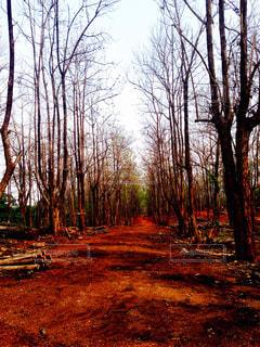 森林の写真・画像素材[414942]