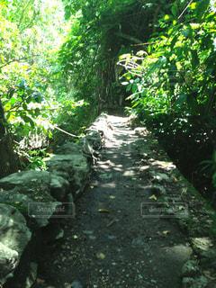 森林の写真・画像素材[424406]