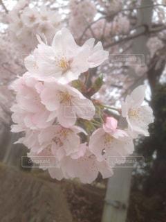 花の写真・画像素材[424468]