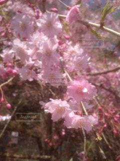 花の写真・画像素材[434289]