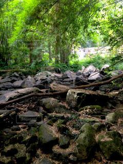 森林の写真・画像素材[452979]