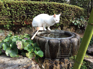 猫の写真・画像素材[422663]