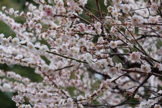 春の写真・画像素材[372257]