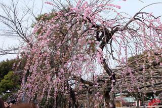 春の写真・画像素材[372272]
