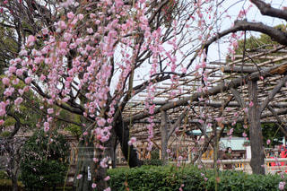 春の写真・画像素材[372274]