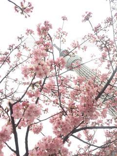 春の写真・画像素材[372292]
