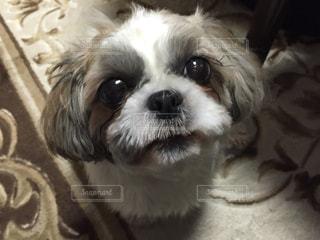 犬の写真・画像素材[372534]