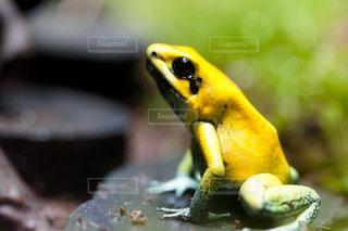 カエルの写真・画像素材[380127]