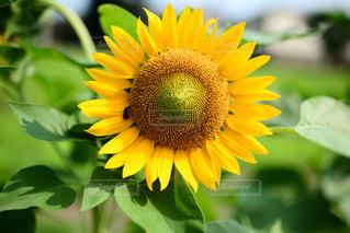 花の写真・画像素材[380908]