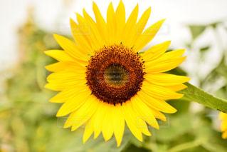 花の写真・画像素材[382007]