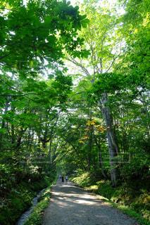 風景 - No.372650