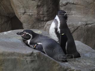 動物の写真・画像素材[375734]