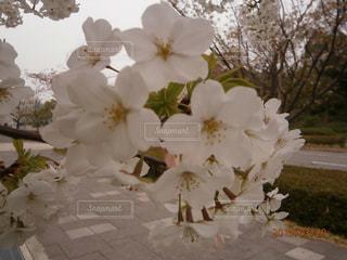 花の写真・画像素材[372690]