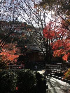 風景 - No.372762