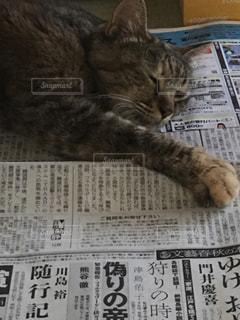 猫の写真・画像素材[374284]