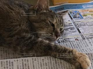 猫の写真・画像素材[374285]