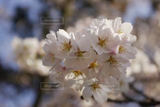春の写真・画像素材[382826]