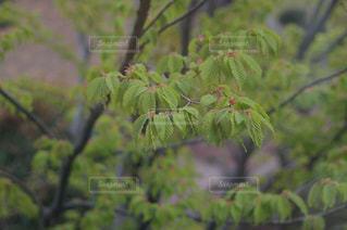花の写真・画像素材[382981]