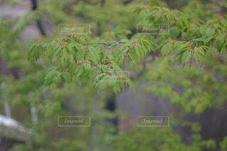 花の写真・画像素材[382986]