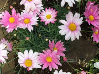 花の写真・画像素材[400920]