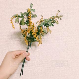 花の写真・画像素材[372980]
