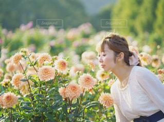 #花の写真・画像素材[372899]