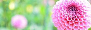 #花の写真・画像素材[372900]