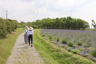 ラベンダー畑と2人の女性の写真・画像素材[2238686]