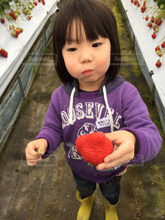 子供の写真・画像素材[373767]