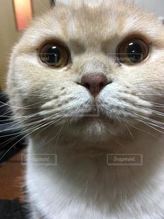 猫の写真・画像素材[374104]