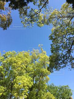 空の写真・画像素材[465807]