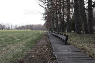 森林 - No.432896