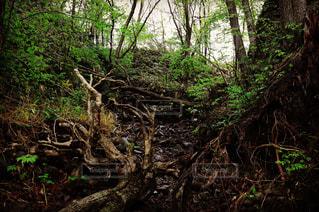 森林 - No.543326
