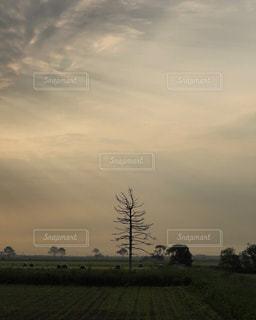 自然の写真・画像素材[597007]