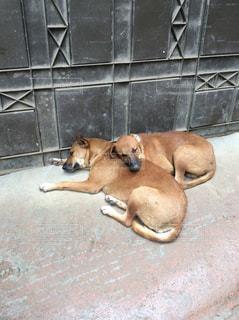 犬の写真・画像素材[375987]