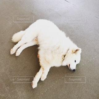 犬 - No.374330