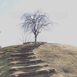 枯れ木の写真・画像素材[374618]