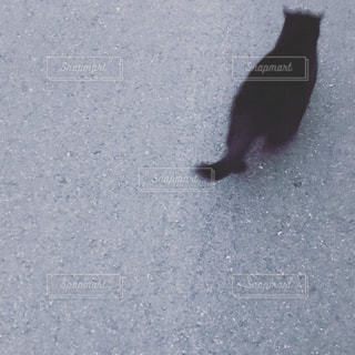 黒猫の写真・画像素材[385898]